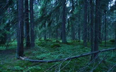 Suomi jälleen mukana luonnonmukaisten pyhien paikkojen kuvakilpailussa