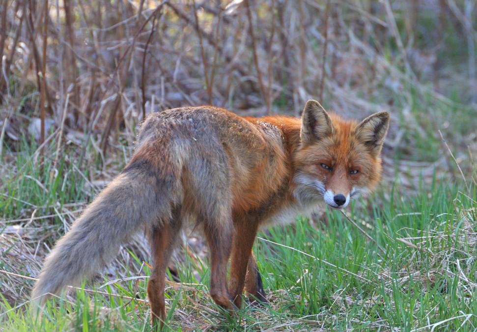 Runonlaulua ja eläinmytogiaa Turussa pyhäinmiestenpäivänä