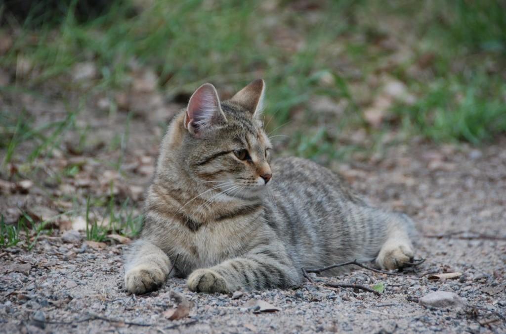 Kissa kansanperinteessä