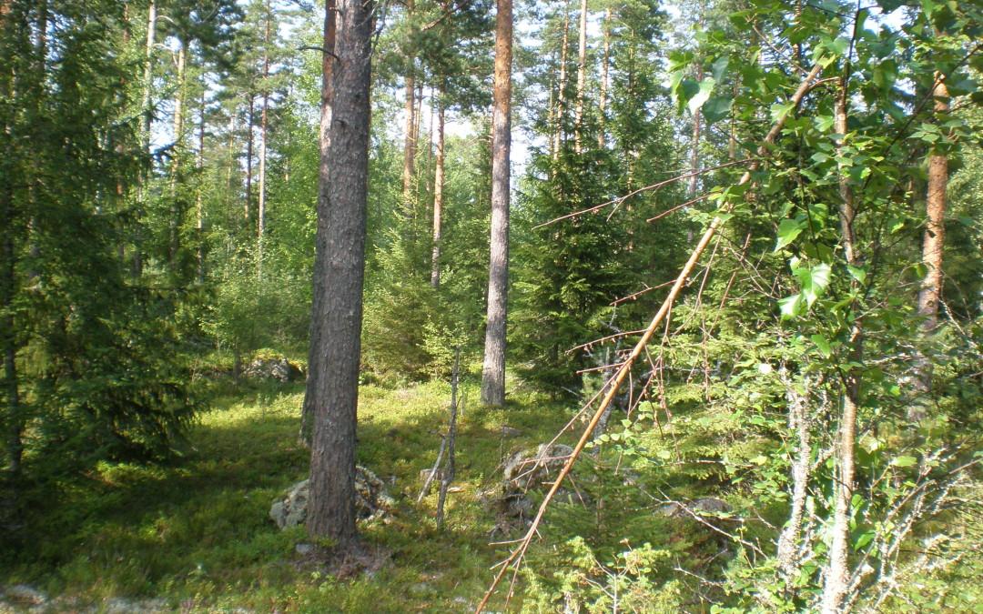 Taivaannaulan retki Lempäälään 13.4.2014
