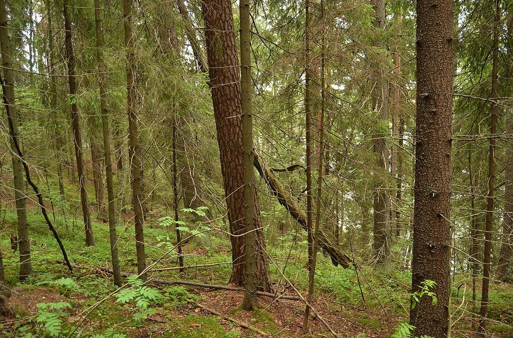 A. W. Yrjänä päähenkilöksi Taivaannaulan avustamaan Ukonvaaja-dokumenttiin