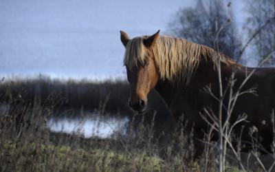 Tule Hiidestä hevonen