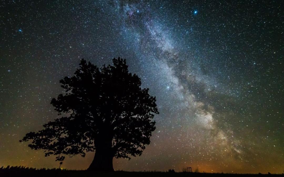 Hiisien kuvakilpailun voittokuvassa Viron vanhin puu