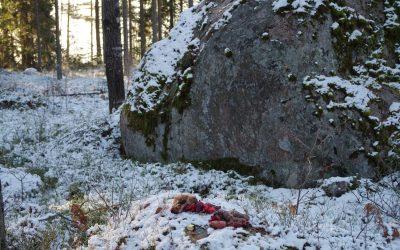 Hiisienpäivänä tapahtuu eri puolilla Suomea