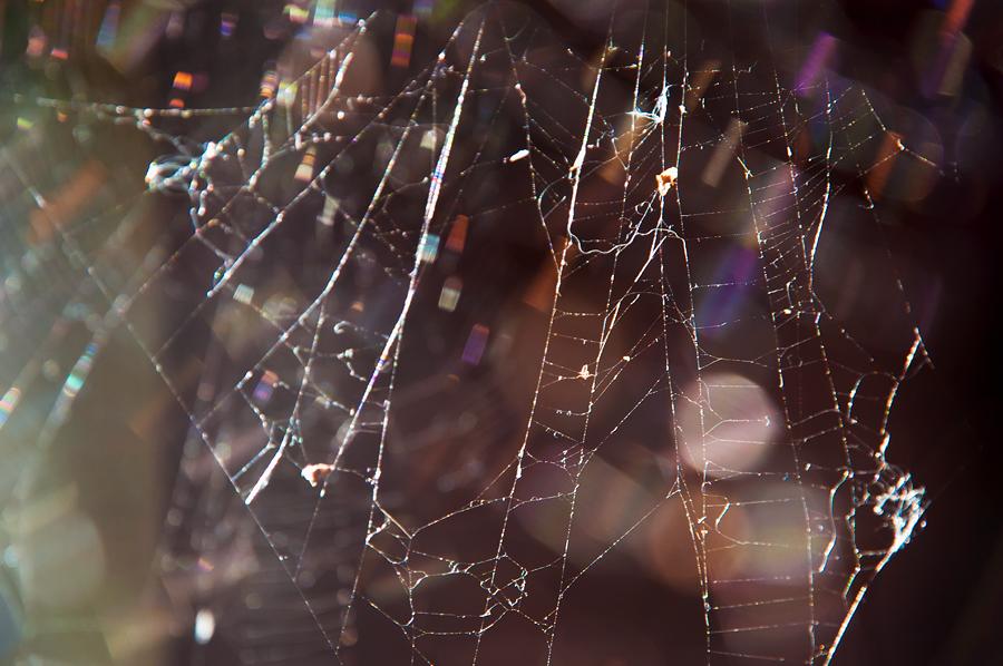 Hämähäkin surmaaminen