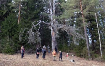 Tänä hiisienpäivänä muistetaan Suomen pyhiä luonnonpaikkoja yksin ja perheiden kesken