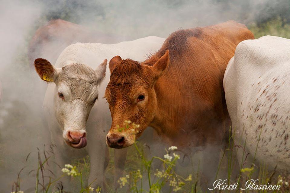 Maitotalous oli naisen kunnia-asia