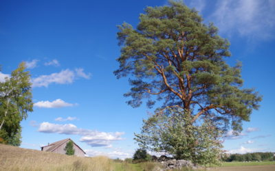 Seminaari kokosi pyhien paikkojen tutkijoita Turkuun