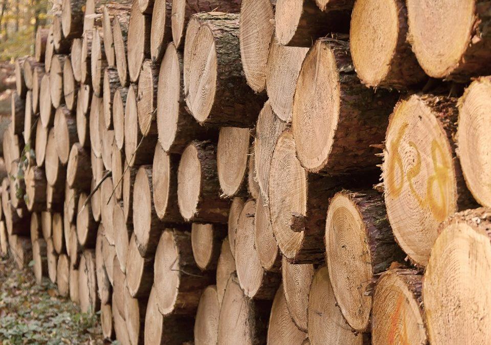 Uiton teemavuoden alustus: Vanhan kansan viisautta puusta