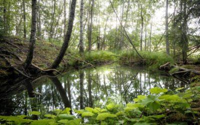 Suomalaiskuvaajalle palkinto pyhien luonnonpaikkojen kuvakilpailussa – Olli Tasson haastattelu